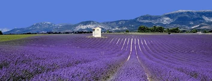 http://provence-villa-rental.provence-beaudine-locations.com/public/pictures/header_charming-rental-provence.jpg