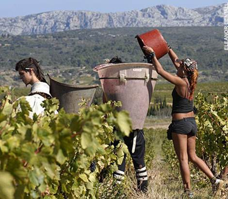 http://i.telegraph.co.uk/multimedia/archive/01055/wine-graphics-2006_1055683a.jpg